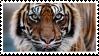 Tiger Stamp by NamelessFeline