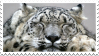 Sleepy Snow Leopard Stamp by NamelessFeline