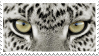 Snow Leapard Eyes Stamp by NamelessFeline