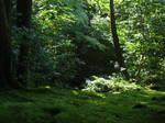 Ginkakuji Woods