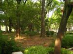 Honmachi Park