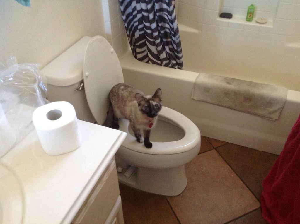 Layla on Toilet by RainbowGuppy1
