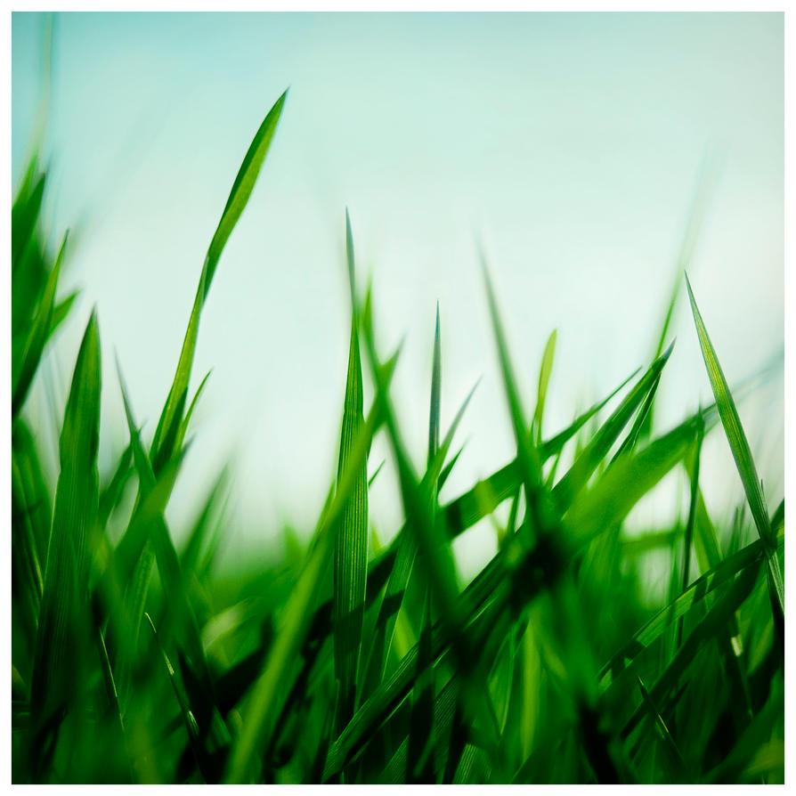 Grass In Advance Tin Dog Food