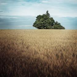 tree by rattattart