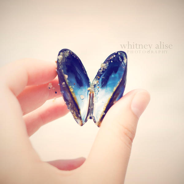 Shell of a Butterfly by WhitneyAlise