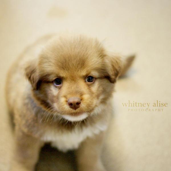 Vanilla Puppy by TheSaval