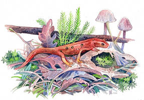Red Newt