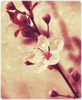Sweet Spring by stardixa