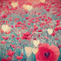 Field of love by stardixa