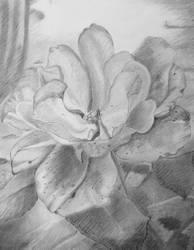Rose by hunnyflash