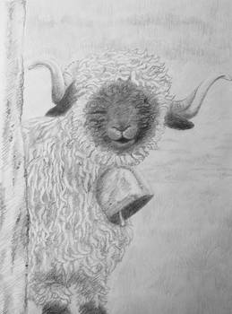 Sheepy Sheep