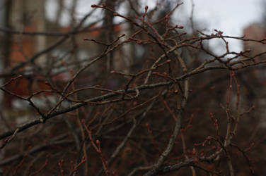 Cropped tree branches