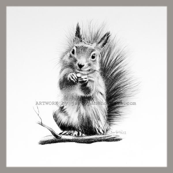 Squirrel Drawing by Rayvenjan on DeviantArt