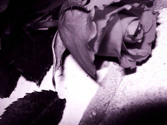 Forsaken Rose by no-salvation-88
