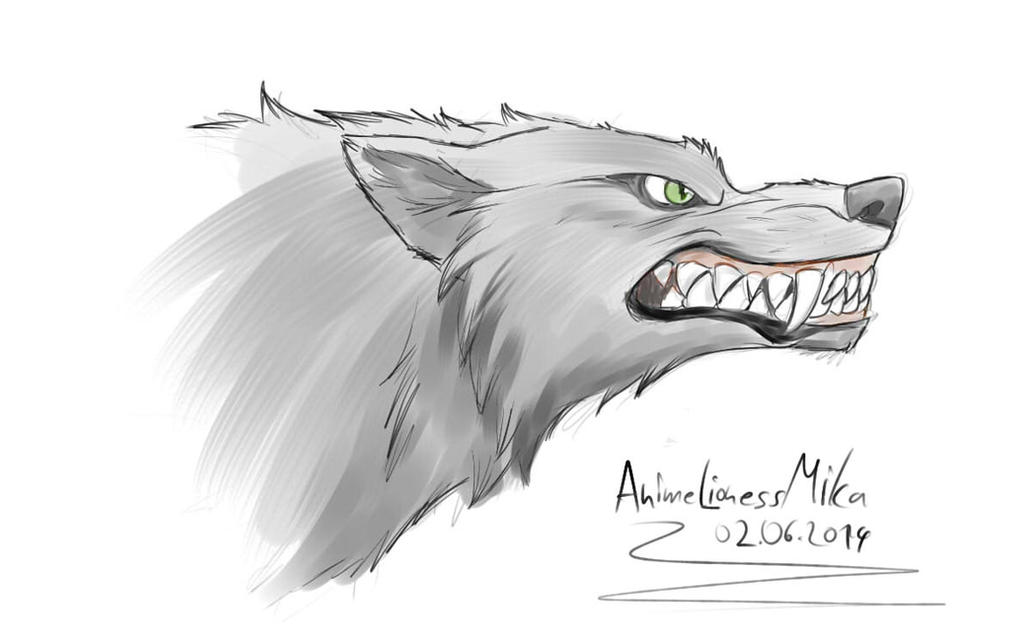 a4807e278 angry wolf sketch by AnimeLionessMika on DeviantArt