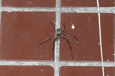 Random spider photo