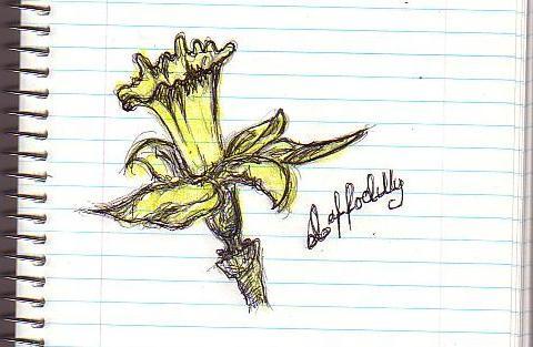 Daffodilly by ~noku-tsuki | Deviantart.com