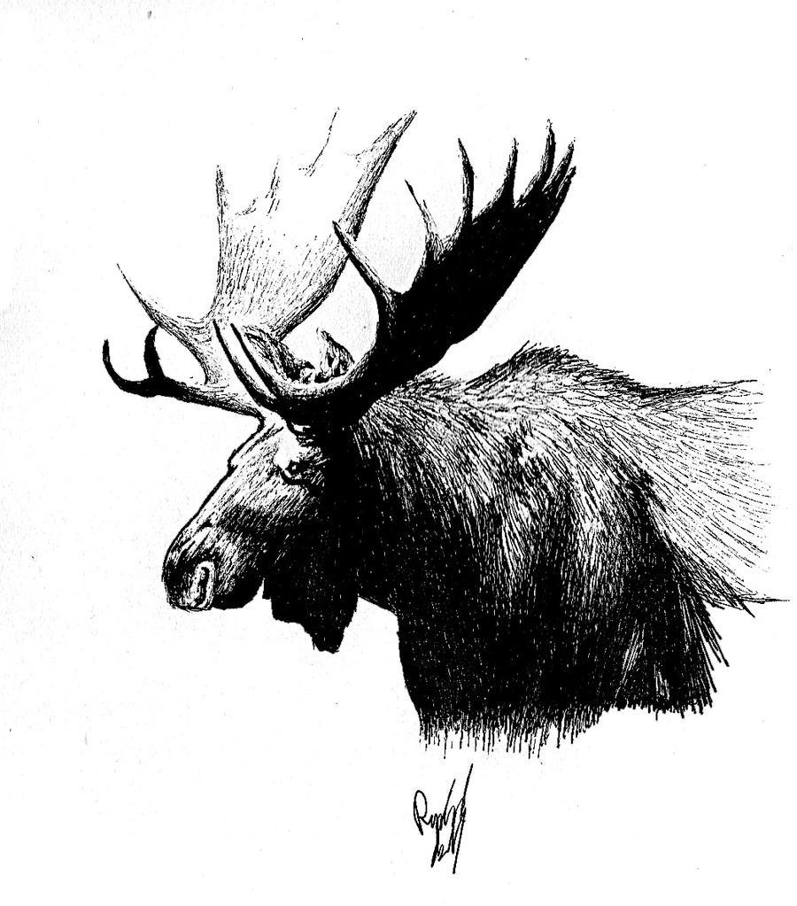 Moose By RachaelSelk On DeviantArt