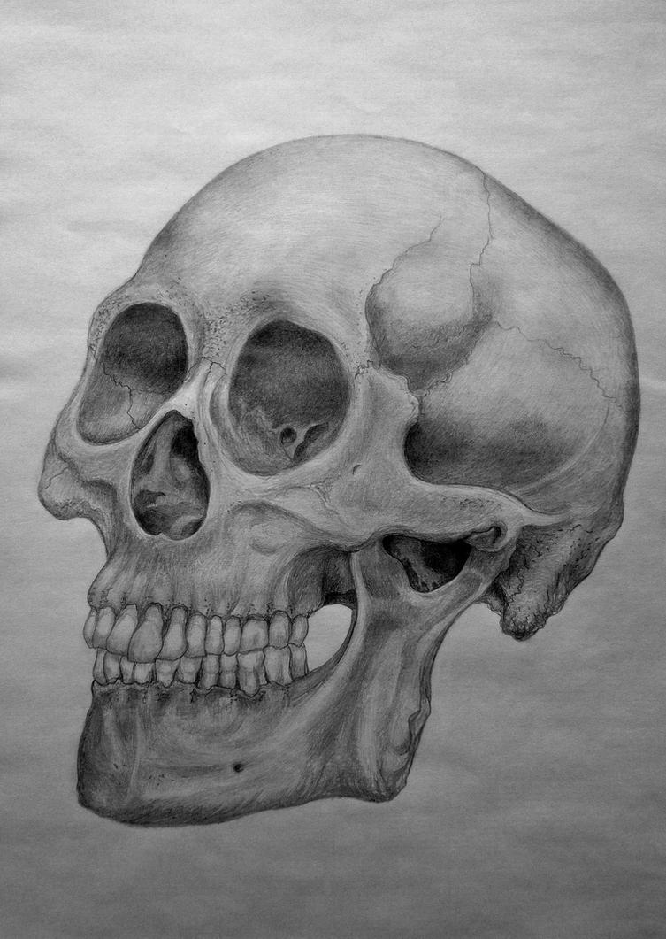 Human Skull by Artsyrat