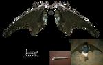Fallen wings 1