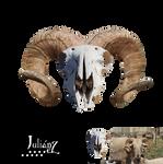 Horned sheep skull