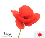 Poppy4