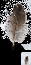 bird feather 2 by Julianez