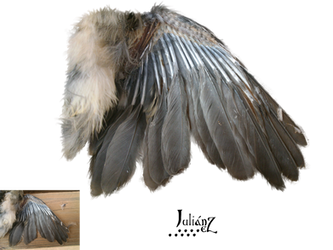 Wing bird by Julianez