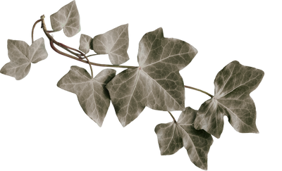 leaves png