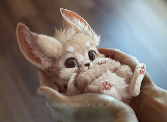 A handful of fennec