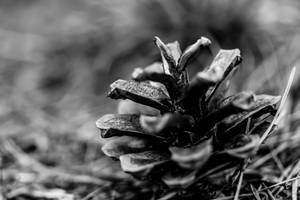 Just a pine cone by AronKwok