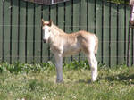 Horse 141