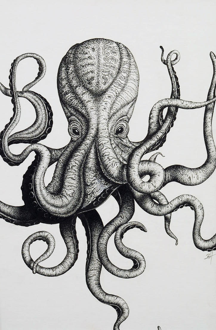 Octopus Tentacles Drawing Tumblr Viewing Gallery