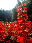All-red flower.