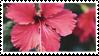 hibiscus stamp by eelteeth