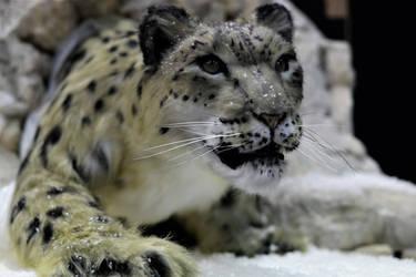 Snow Leopard Realistic Replica