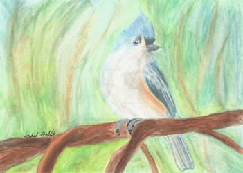 Watercolour pencil little bird