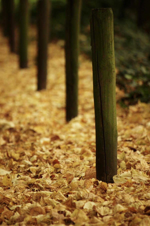 AutumnPoles by roaldfre