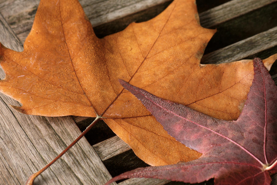 Autumn Dew by roaldfre