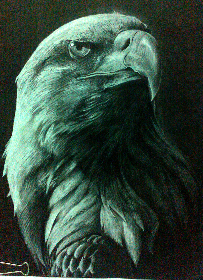 White eagle by PandaMGA