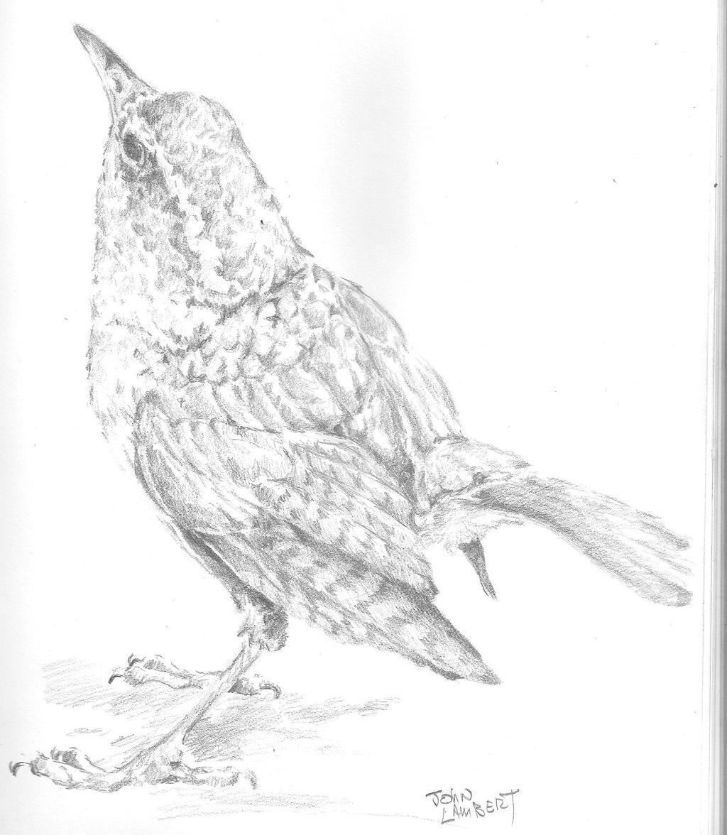 Bird by Batman4art