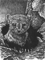 Weasel by Batman4art