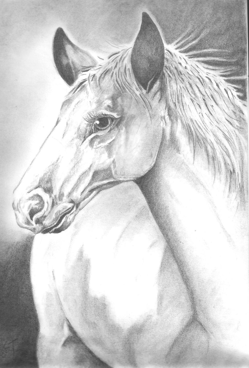Horse by Batman4art