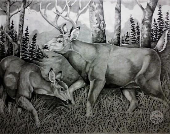 Mule Deer by Batman4art