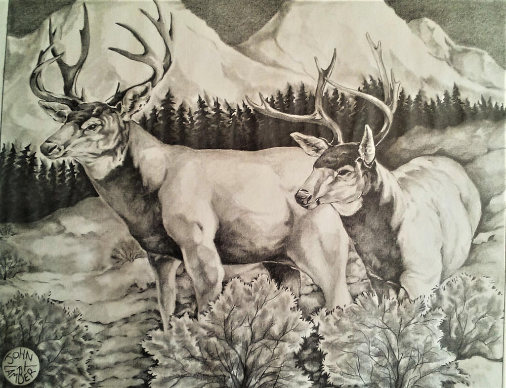 Mule Deer by Batman4art