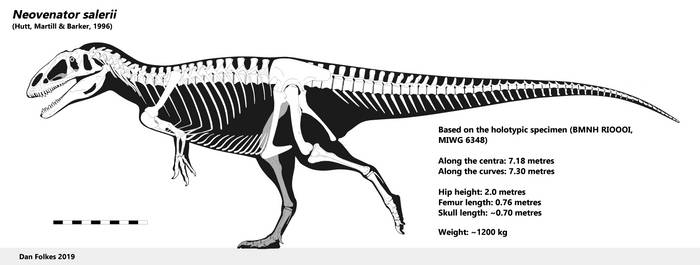 Neovenator skeletal in full resolution