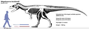 Megalosaurus bucklandii - skeletal