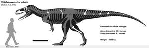 Wiehenvenator albati - composite skeletal