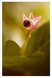 ladybug by grace-note