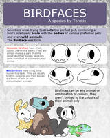 Birdface Reference Sheet by Torotiel